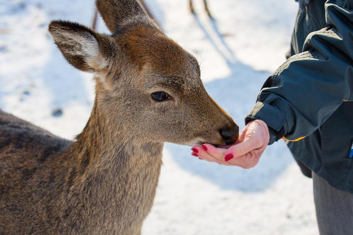 Картинки по запросу binatang di tempat dingin