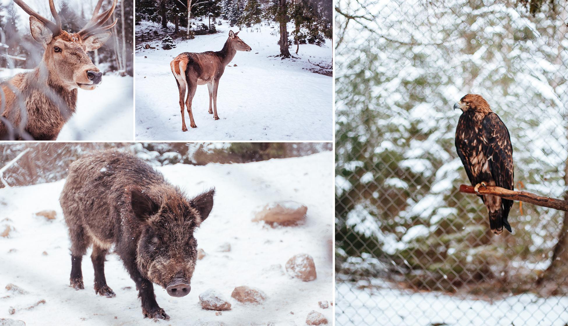 """Результат пошуку зображень за запитом """"вольєрне господарство яремче зима"""""""