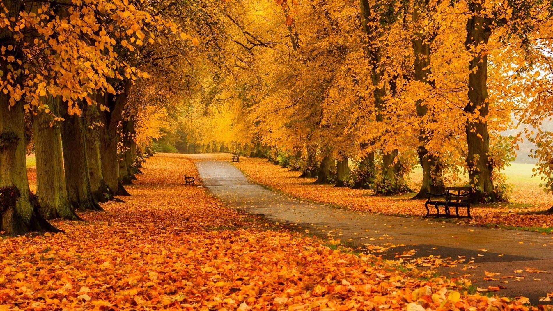 """Картинки по запросу """"фото осінь біла церква"""""""""""